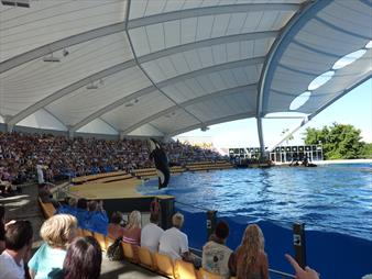 Loro Parque Review, Useful Info & Tips