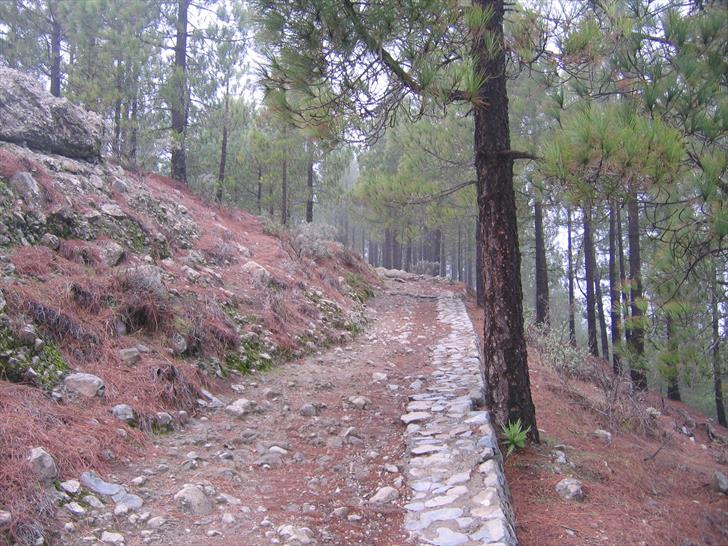 Forest around Roque Nublo