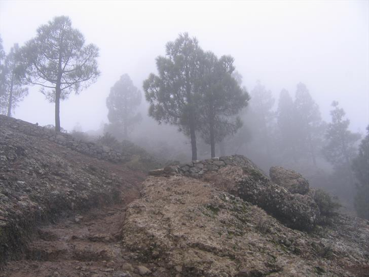 Roque Nublo trail second half