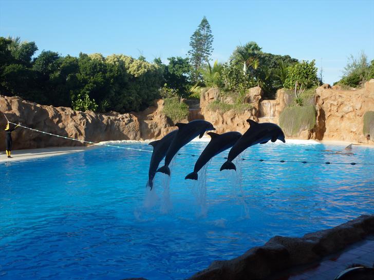 Loro Parque dolphin show