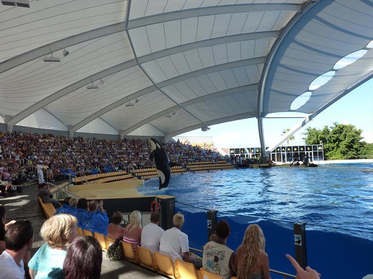 Loro Parque orca show
