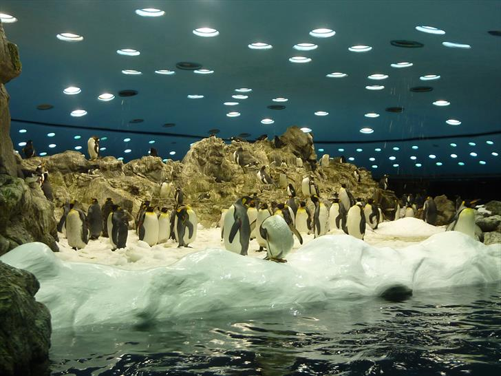 Planet Penguin