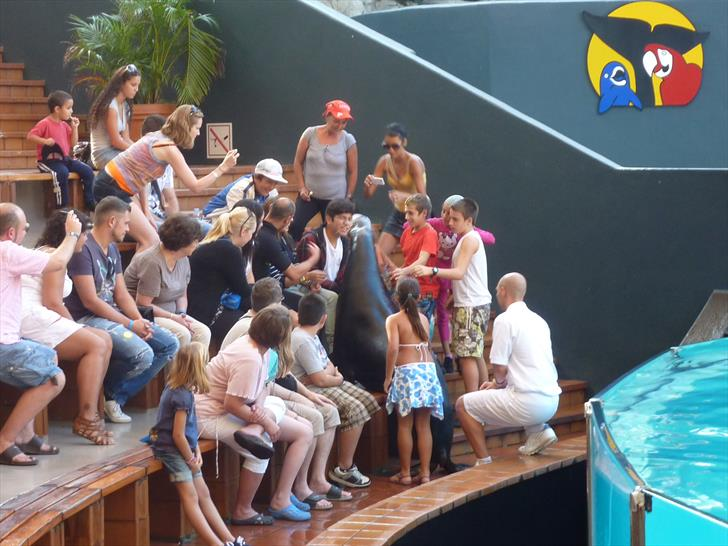 One of the sea lions greeting spectators